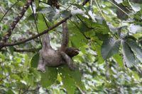indira kate kalmbach yoga costa rica yoga alliance training 200 hour Costa Rica yoga teacher training